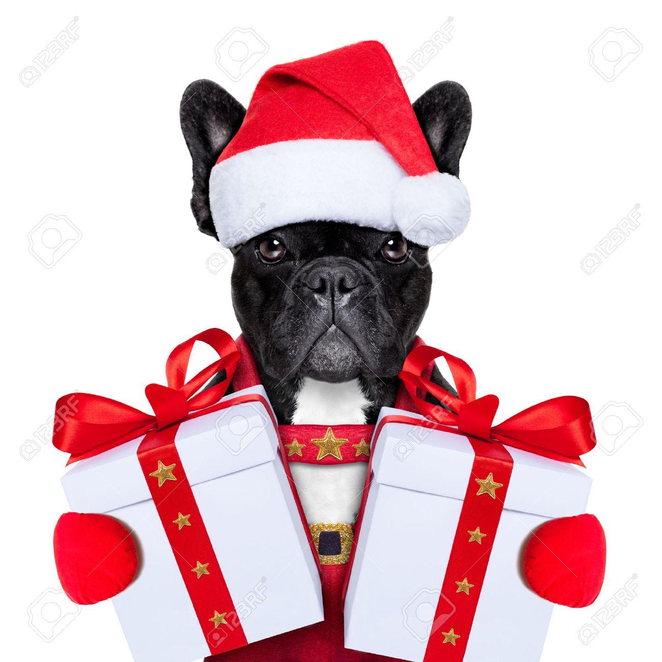 Weihnachtsmann Weihnachten Hund Trägt Einen Hut Mit Einem ...