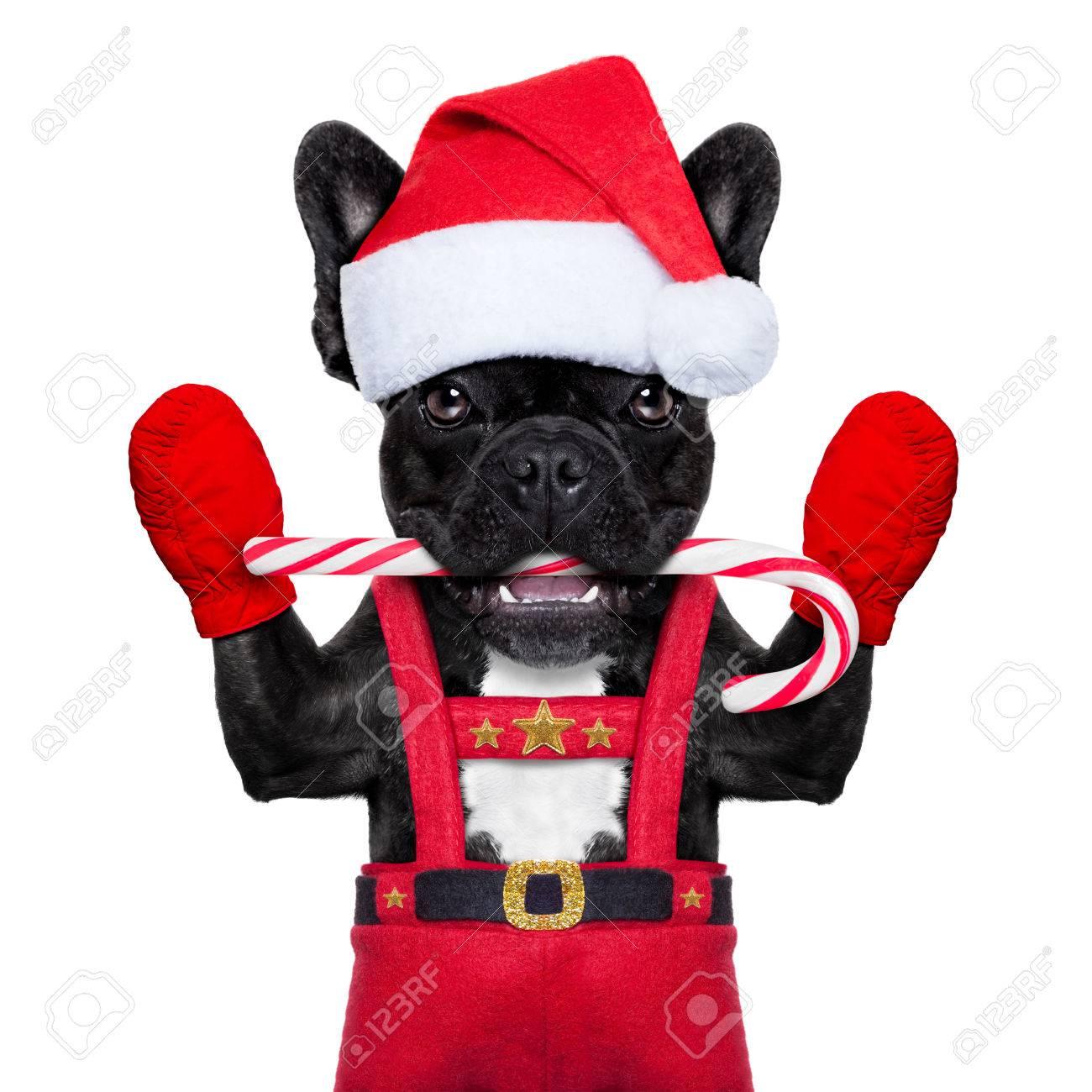 Weihnachtsmann-Weihnachtshund Mit Kandiszucker In Mund, Isoliert Auf ...