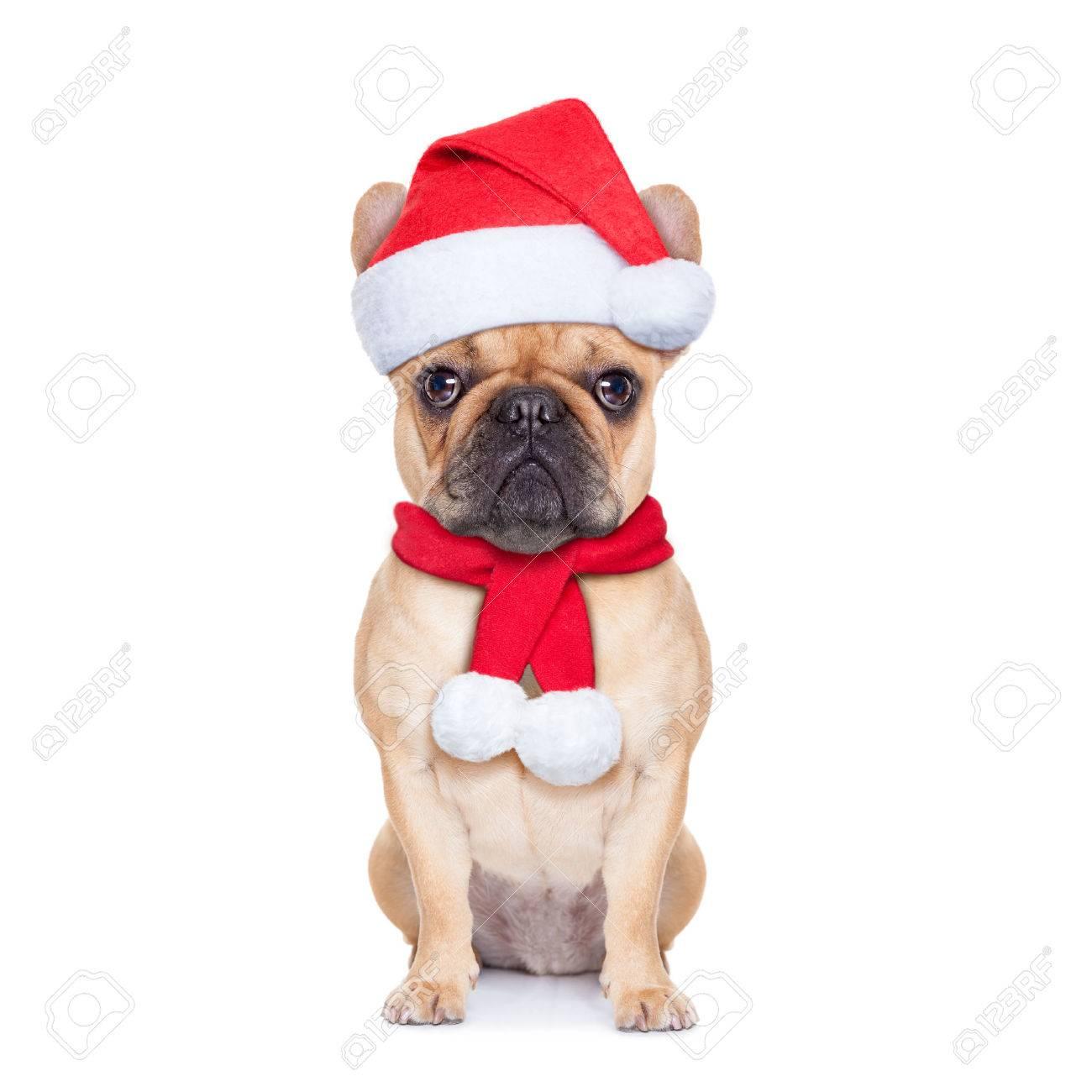 Weihnachtsmann-Weihnachts Hund Isoliert Auf Weißem Hintergrund ...