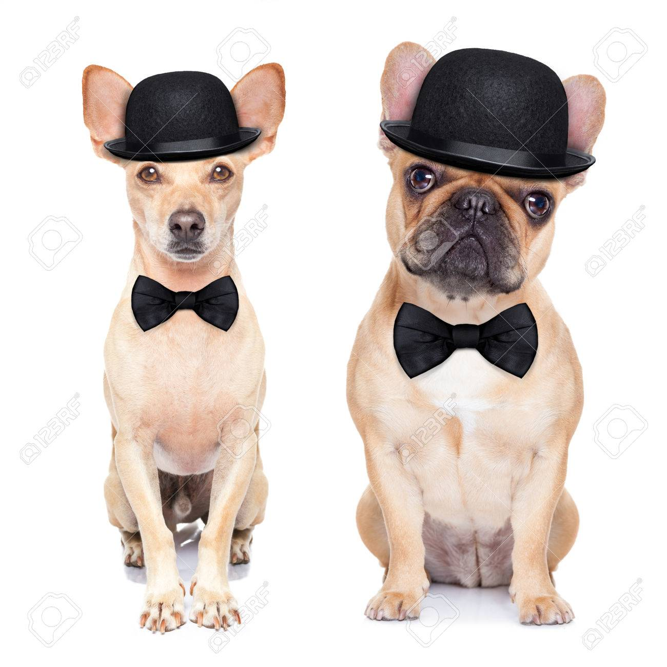 Dogs Wearing Mustaches Couple of Dogs Wearing a