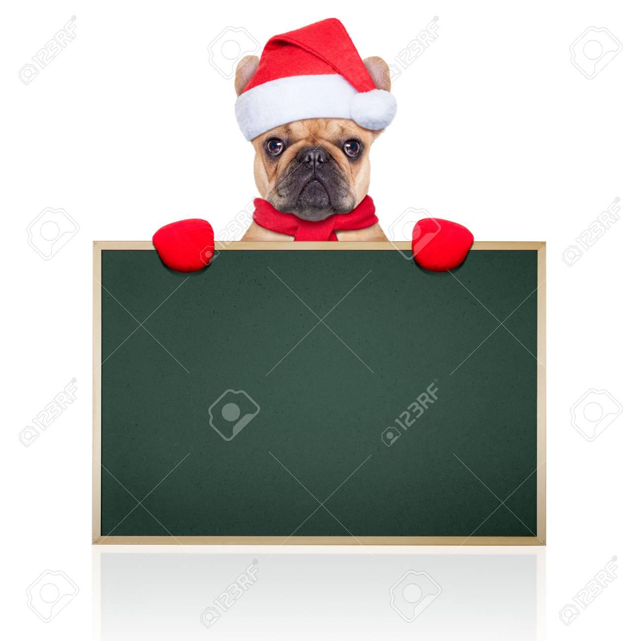 Weihnachtsmann-Weihnachts Hund Hinter Und Halten Eine Leere Leere ...