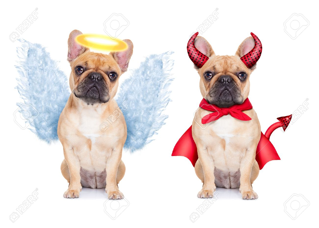 Bulldog Stock Photos Images. Royalty Free Bulldog Images And Pictures