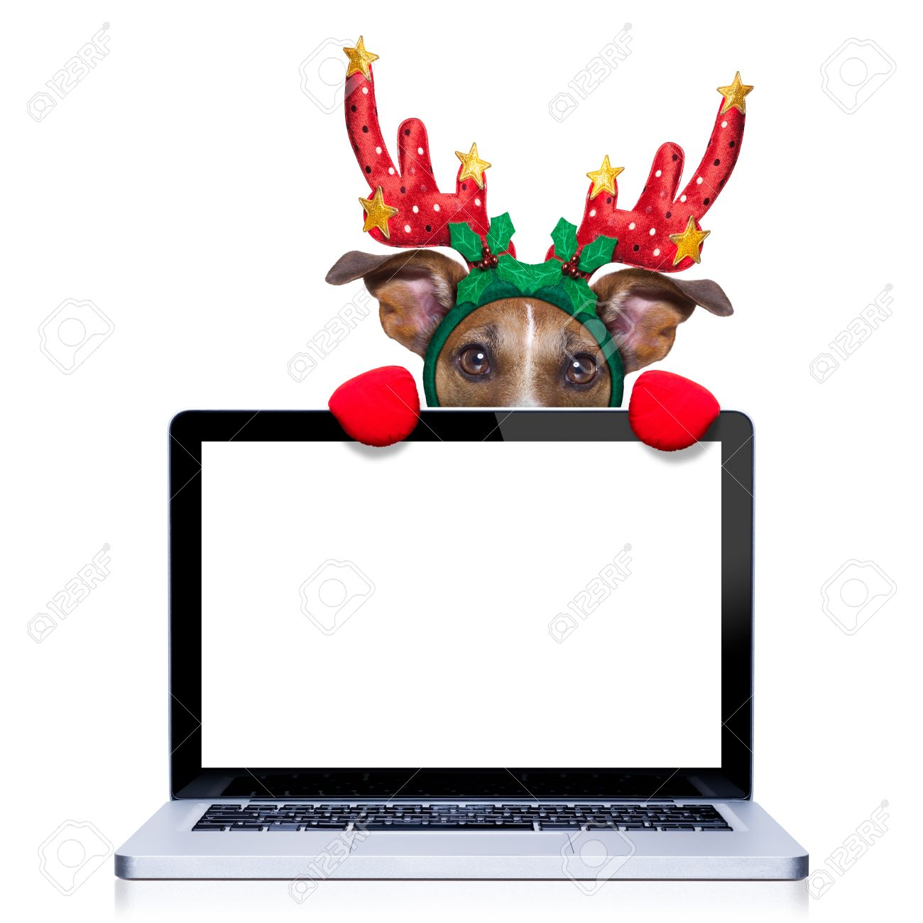 Christmas Dog With Reindeer Costume Behind A Laptop Computer ...