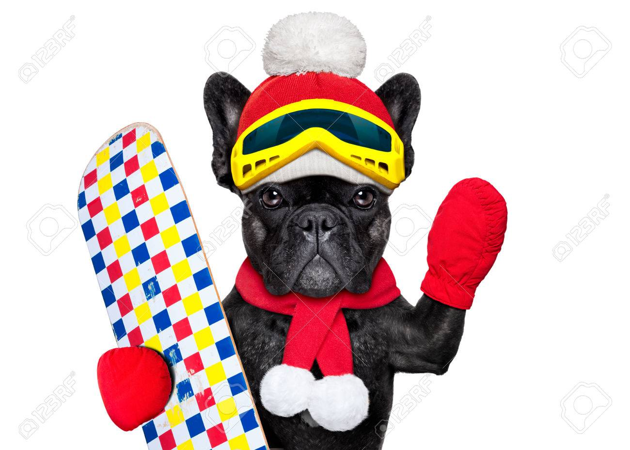 French Bulldog Dog With Ski