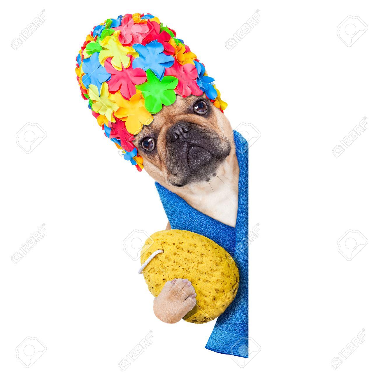 archivio fotografico cane bulldog francese pronto a fare un bagno o una doccia indossando una cuffia in possesso di una spugna accanto a una bandiera