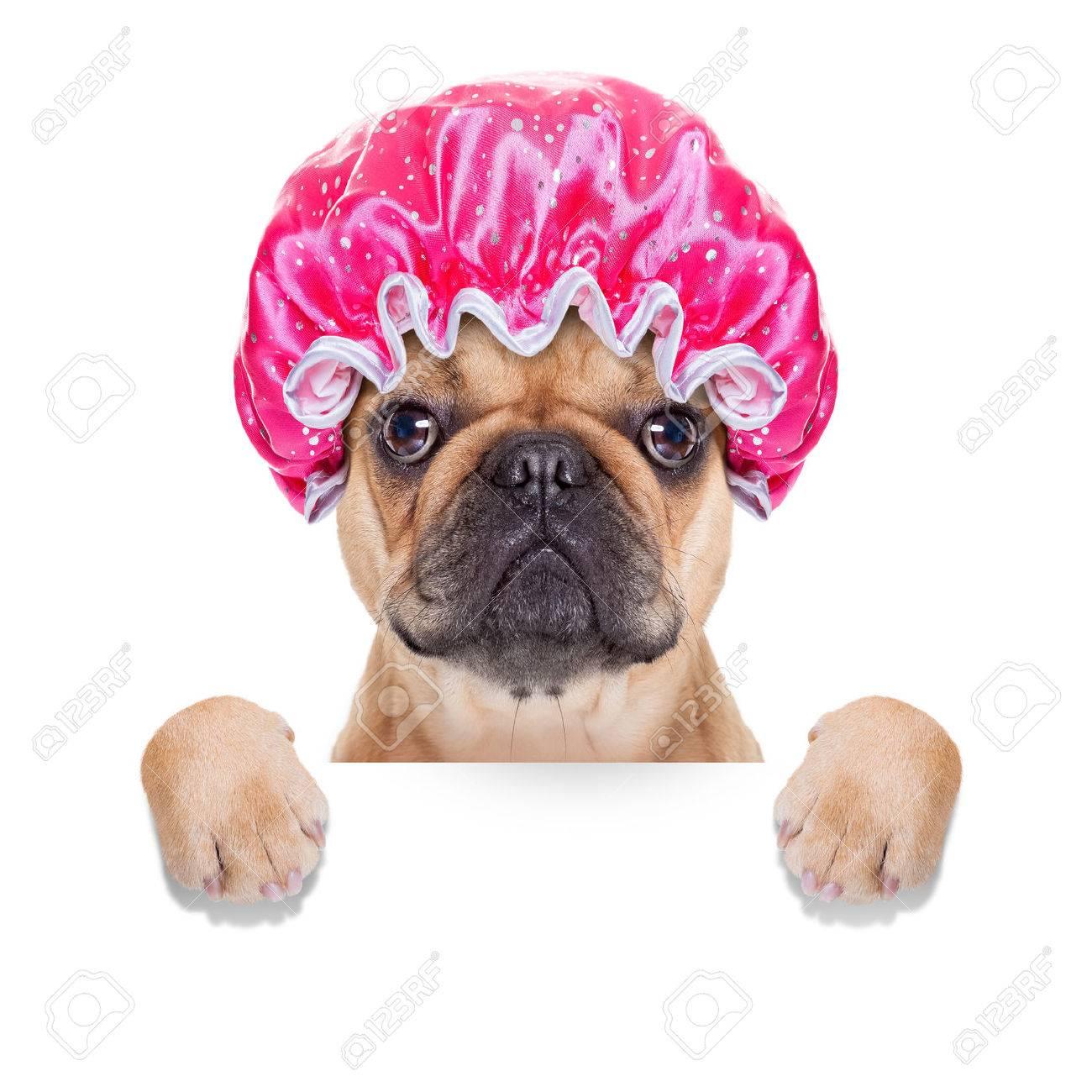 archivio fotografico cane bulldog francese pronto a fare un bagno o una doccia indossando una cuffia isolato su sfondo bianco
