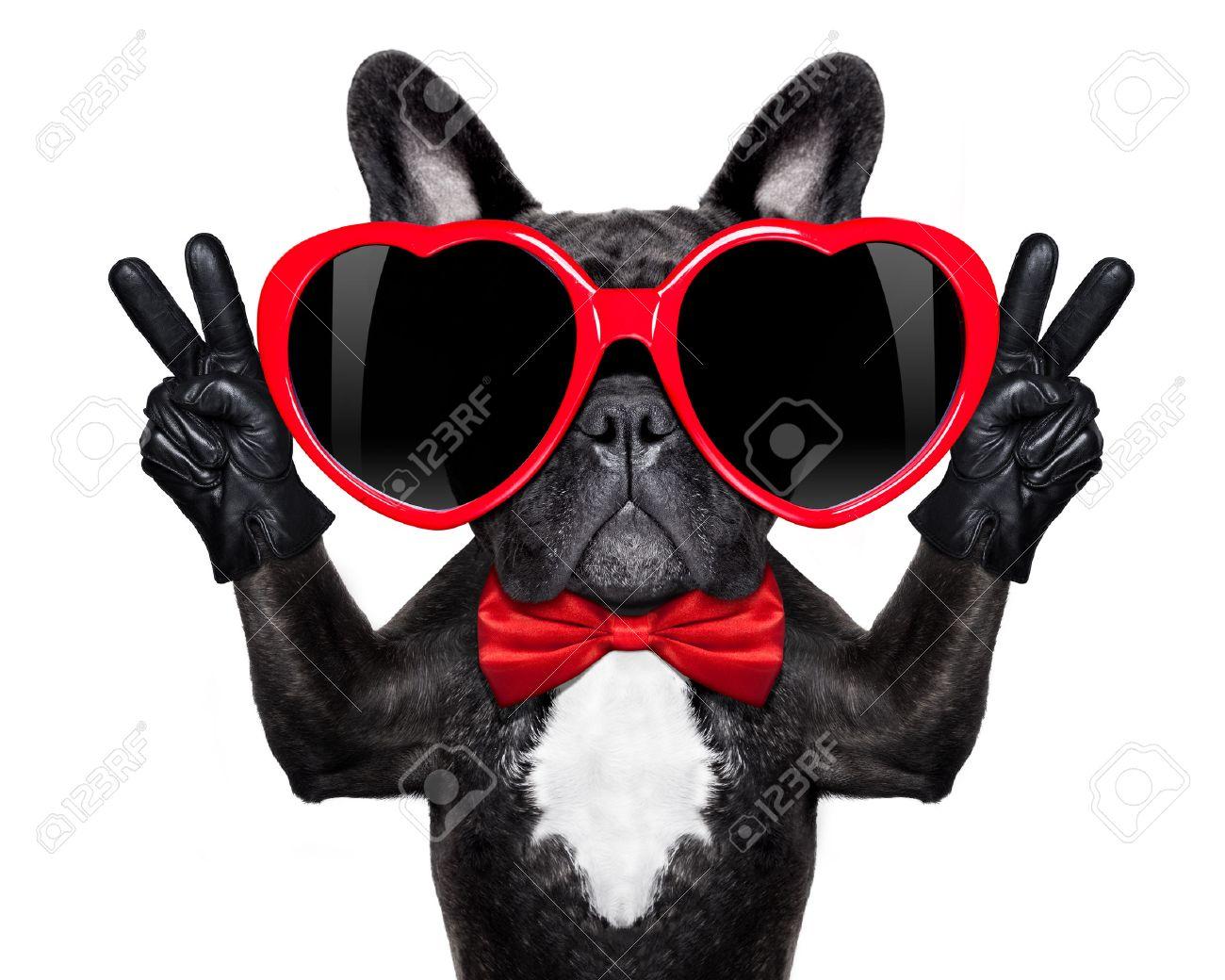 37161818-bouledogue-fran%C3%A7ais-chien-heureux-et-en-amour-montrant-doigts-de-paix-et-de-victoire-isol%C3%A9-sur-fond-blan.jpg