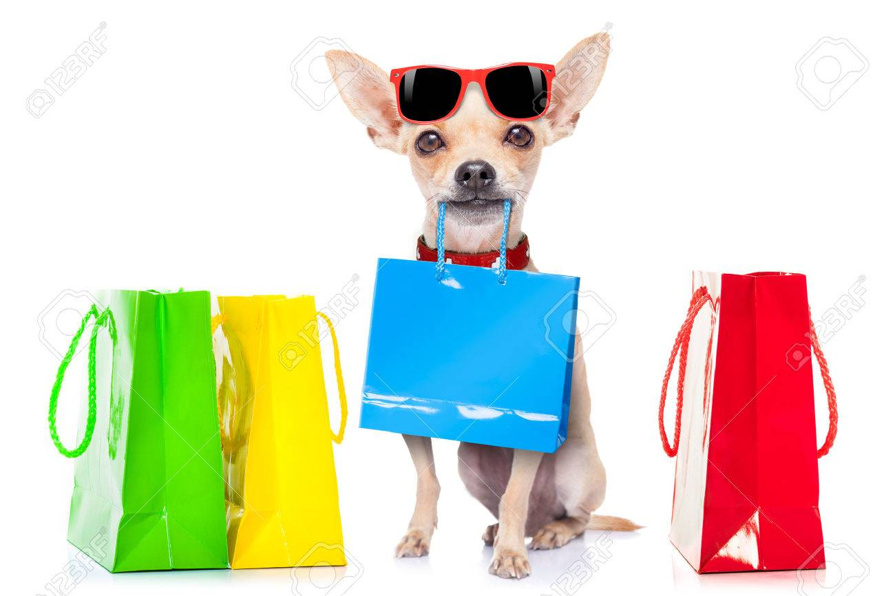 chihuahua dog with shopping bags ready for discount and sale
