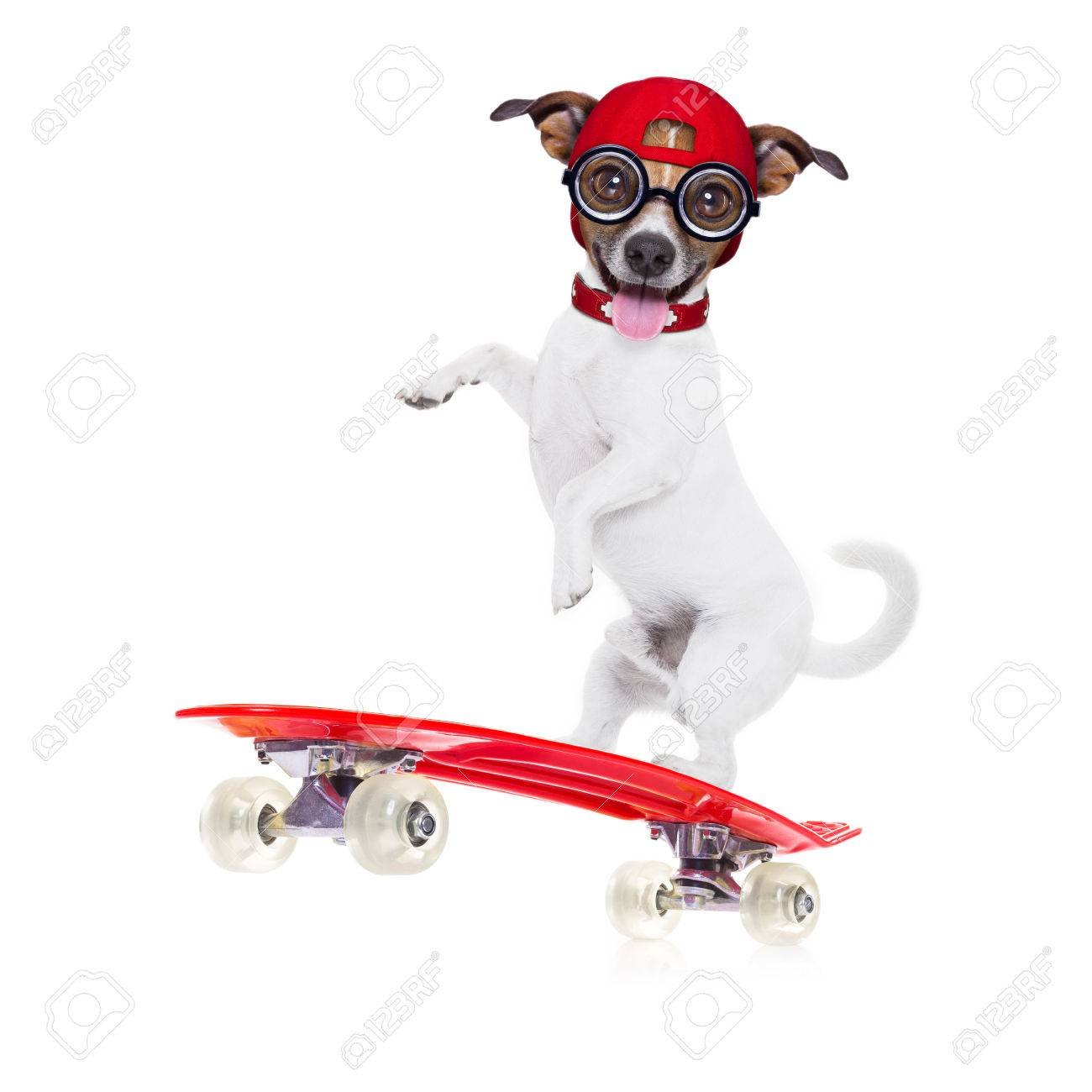 Jack Russell Skater Dog With Red Cap Ready To Play Balancing