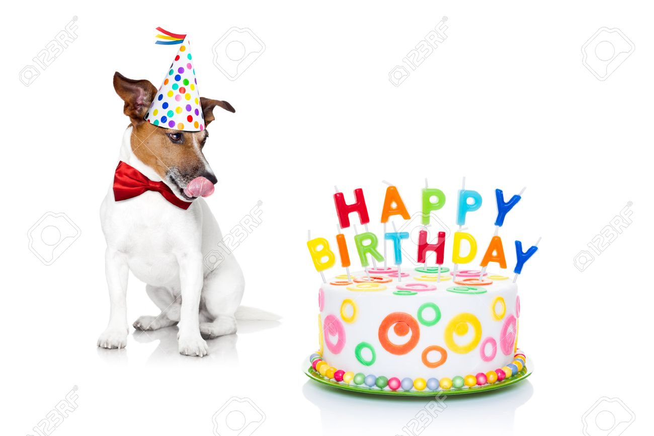 Jack Russell Dog With Licking Tongue And Hungry For A Happy Birthday Cake Candels