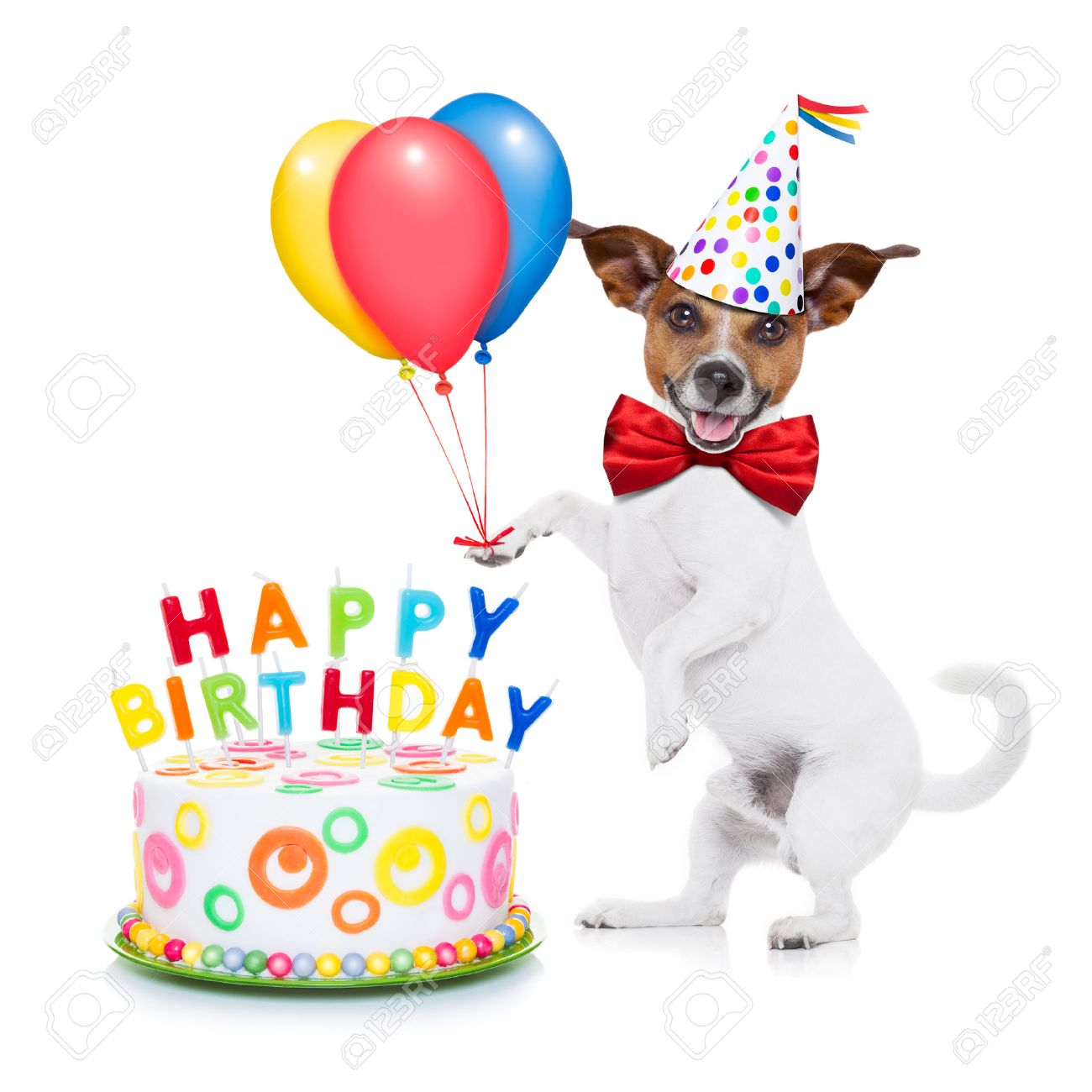 Jack Russell Dog As A Surprise With Happy Birthday Cake Wearing Red Tie And Party