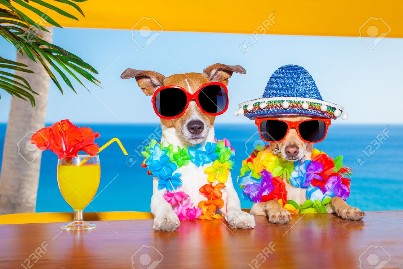 Funny Cool Couple Of Dogs Drinking Cocktails At The Bar In A Beach Club Party With