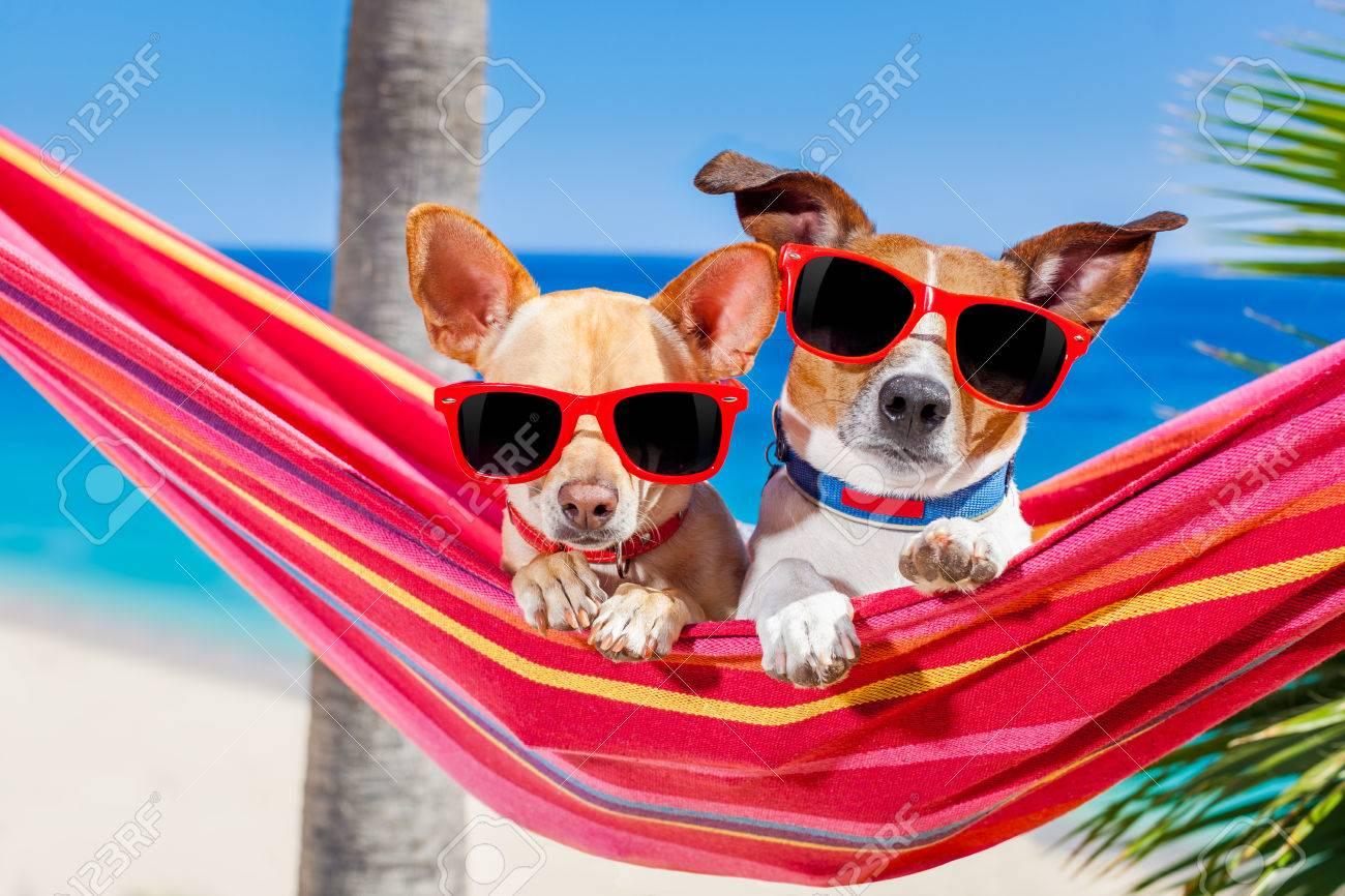 Je voudrais...  - Page 3 40575311-couple-de-deux-chiens-se-d-tendre-sur-un-hamac-rouge-de-fantaisie-avec-des-lunettes-de-soleil-dans-l-Banque-d%27images