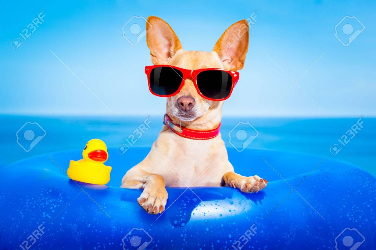 40575342-chien-chihuahua-sur-un-matelas-dans-l-eau-de-mer-%C3%A0-la-plage-profiter-des-vacances-de-vacances-d-.jpg