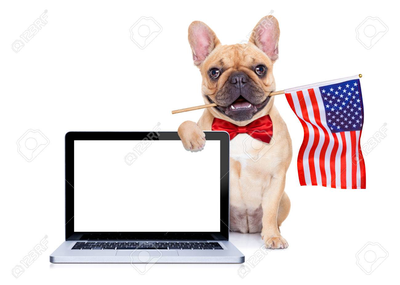 french bulldog  dog waving a flag of usa on independence day on 4th of july Stock Photo - 41039312