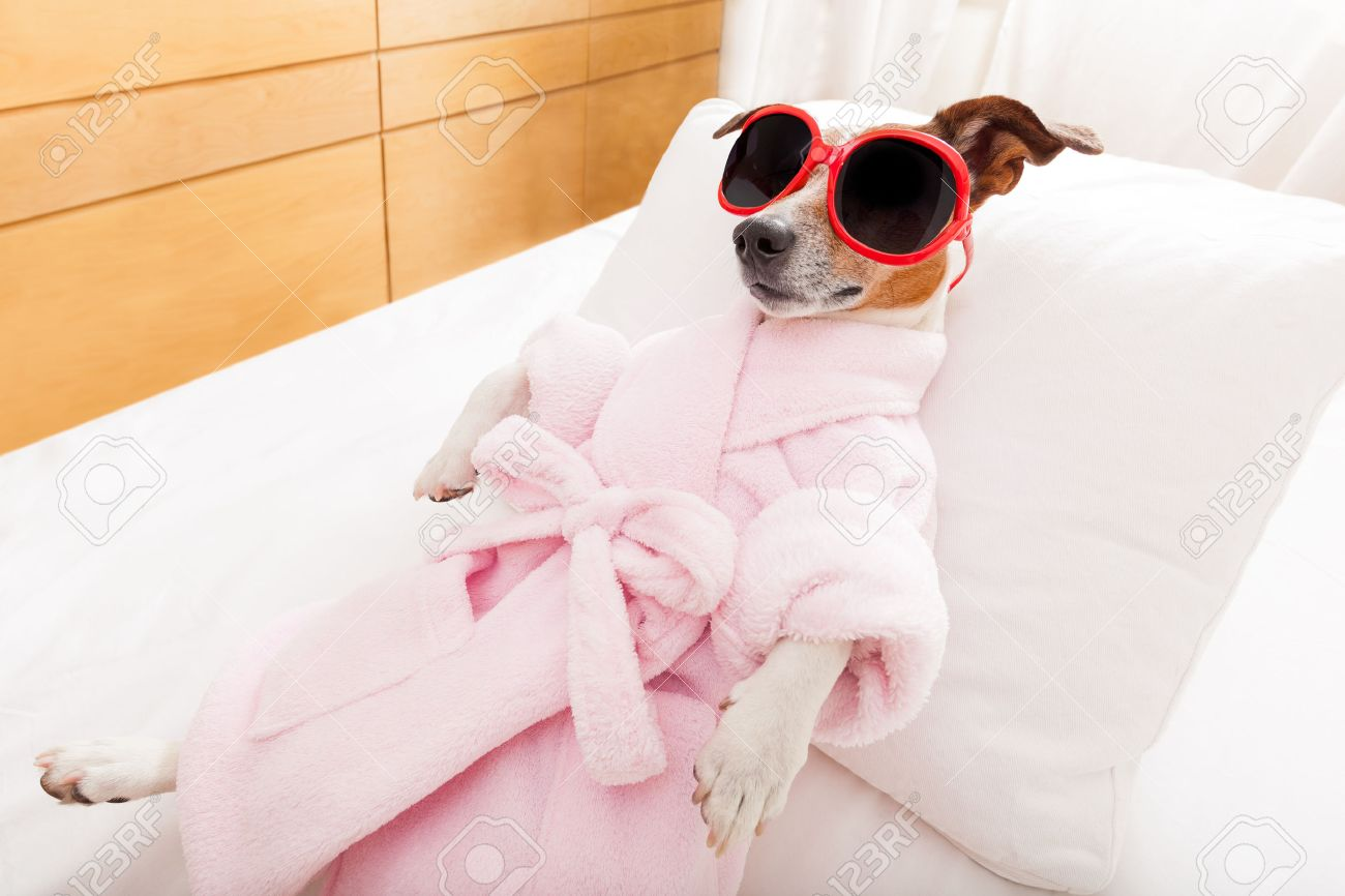 jack russell dog relaxing  and lying, in   spa wellness center ,wearing a  bathrobe and funny sunglasses Stock Photo - 41763457