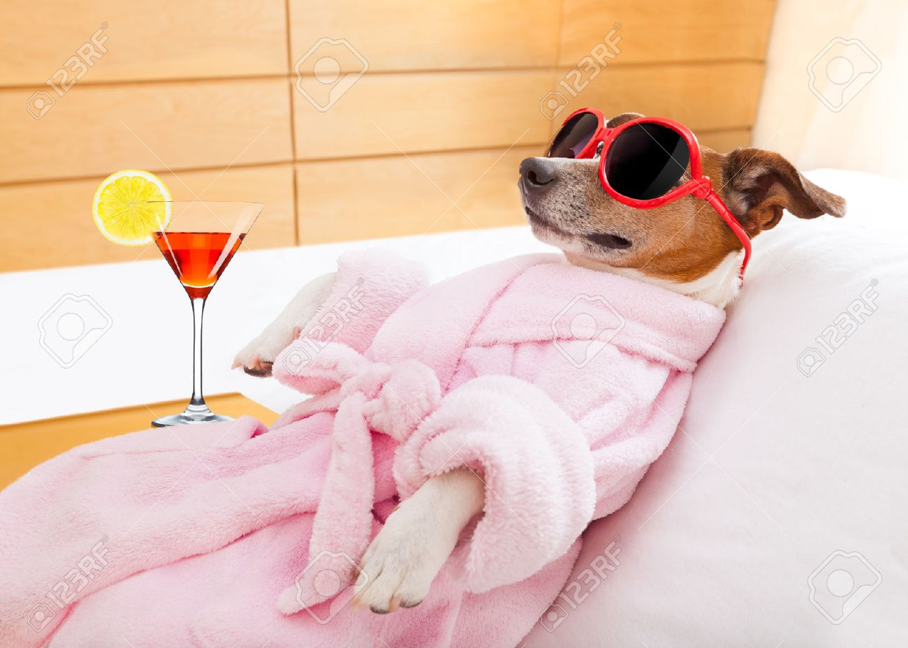 jack russell dog relaxing  and lying, in   spa wellness center ,wearing a  bathrobe and funny sunglasses , martini cocktail inlcuded Stock Photo - 41763459