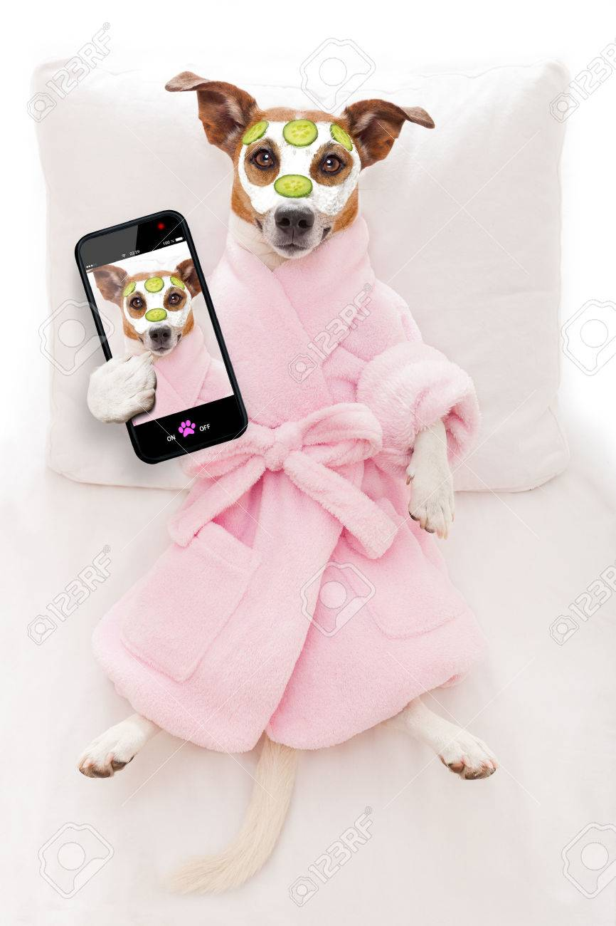 jack russell dog relaxing  and lying, in   spa wellness center ,getting a facial treatment with  moisturizing cream mask and cucumber, while taking a selfie with smartphone Stock Photo - 42304638