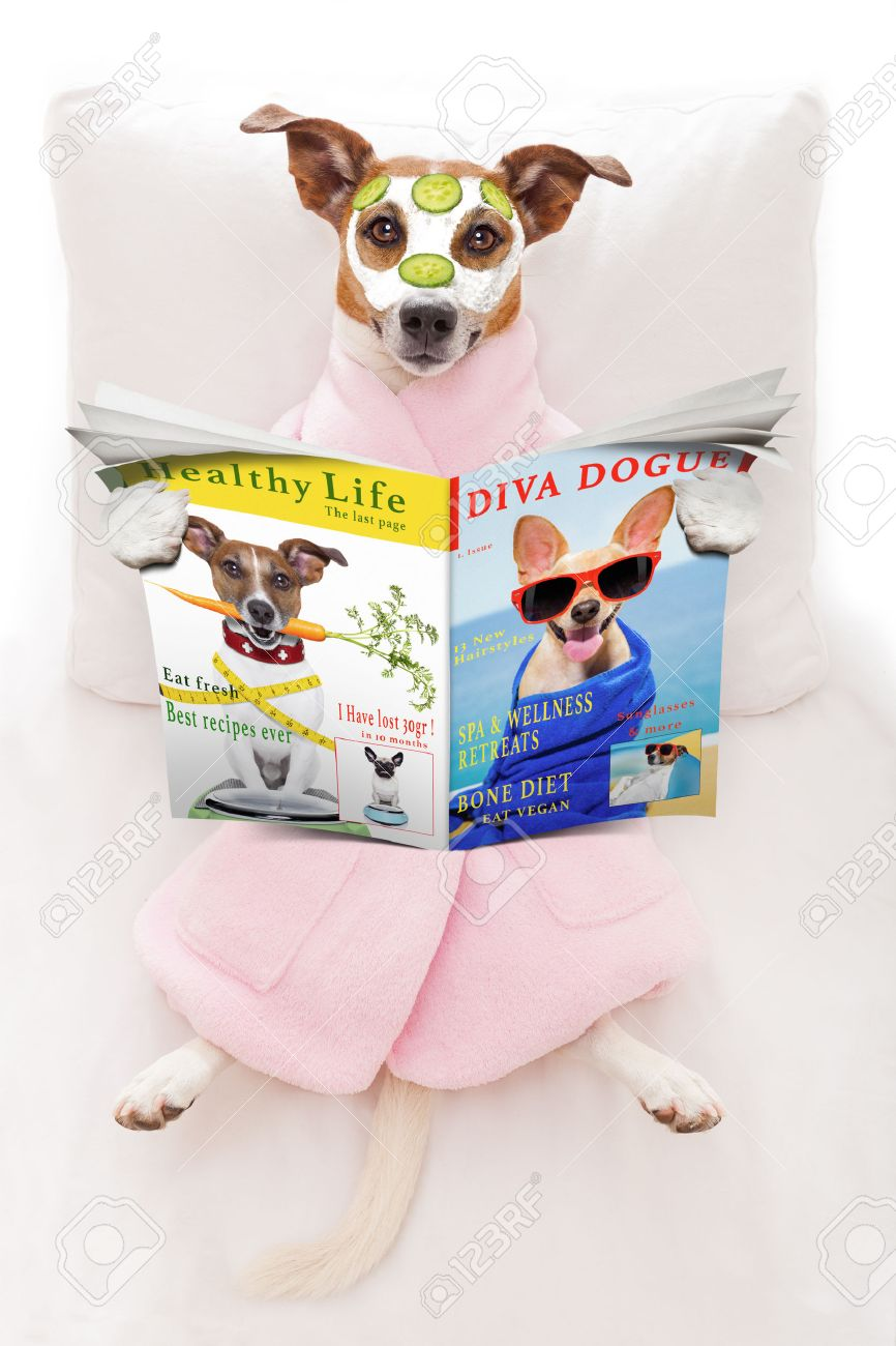 jack russell dog relaxing  and lying, in   spa wellness center ,getting a facial treatment with  moisturizing cream mask and cucumber, while  reading a magazine or newspaper Stock Photo - 42304643