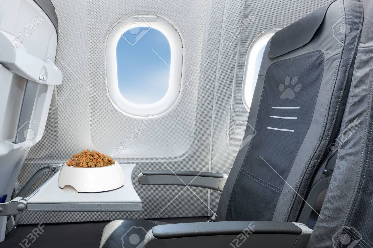 pet bowl full of food inside an airplane  window seat  where pets are welcome on board Stock Photo - 42304646