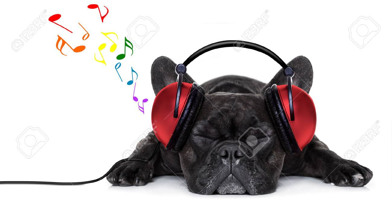 french bulldog dog listening to music with earphones or headphones,while relaxing or sleeping on the floor, isolated on white background Stock Photo - 42304660