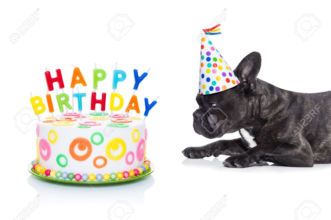 French Bulldog Dog Hungry For A Happy Birthday Cake With Candles Wearing Party Hat