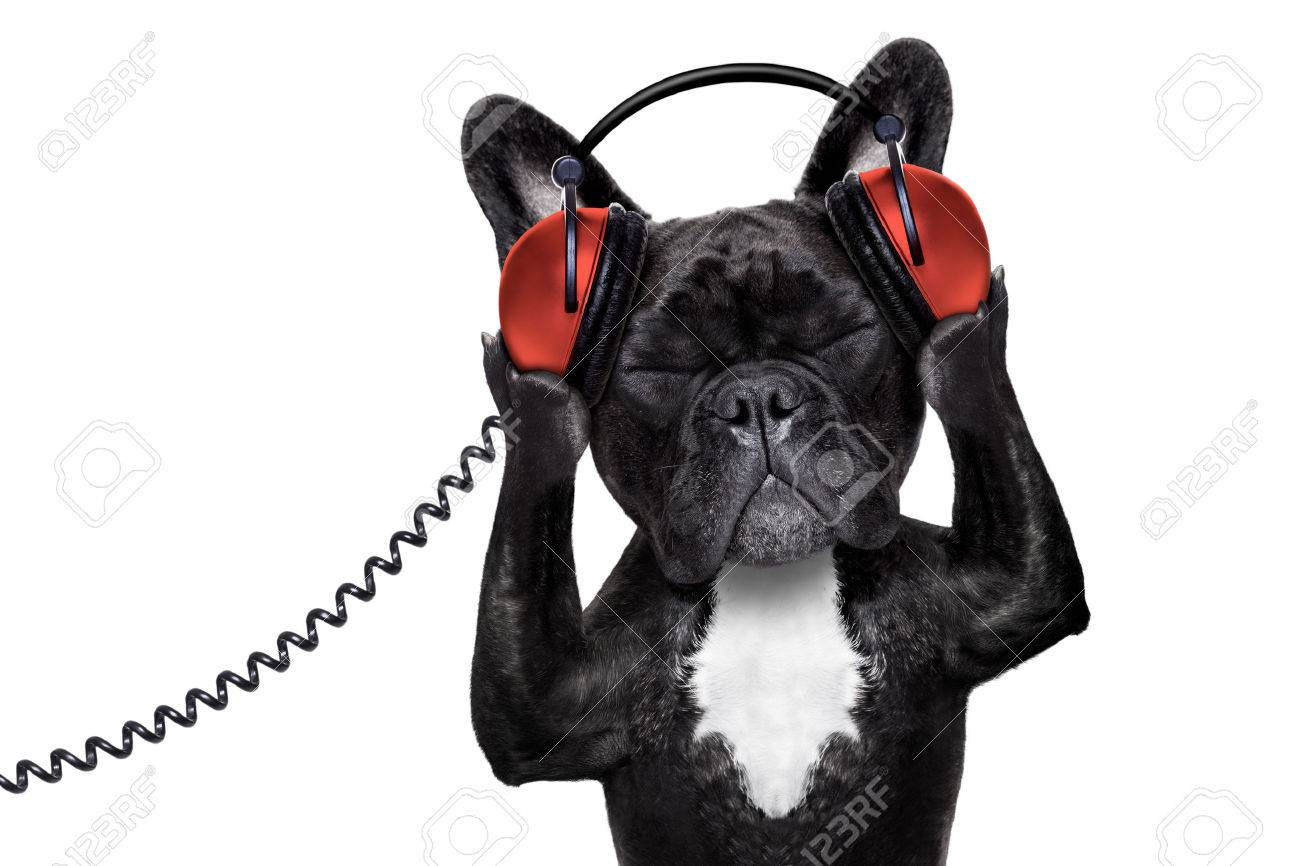 french bulldog dog  listening to oldies with headphones Stock Photo - 42698553