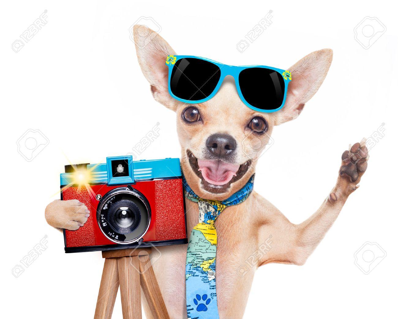 Loto de Février 2018 - Page 3 42737175-fra-che-photographe-touristique-chien-prenant-un-instantan-ou-une-image-avec-un-vieil-appareil-photo-Banque-d'images