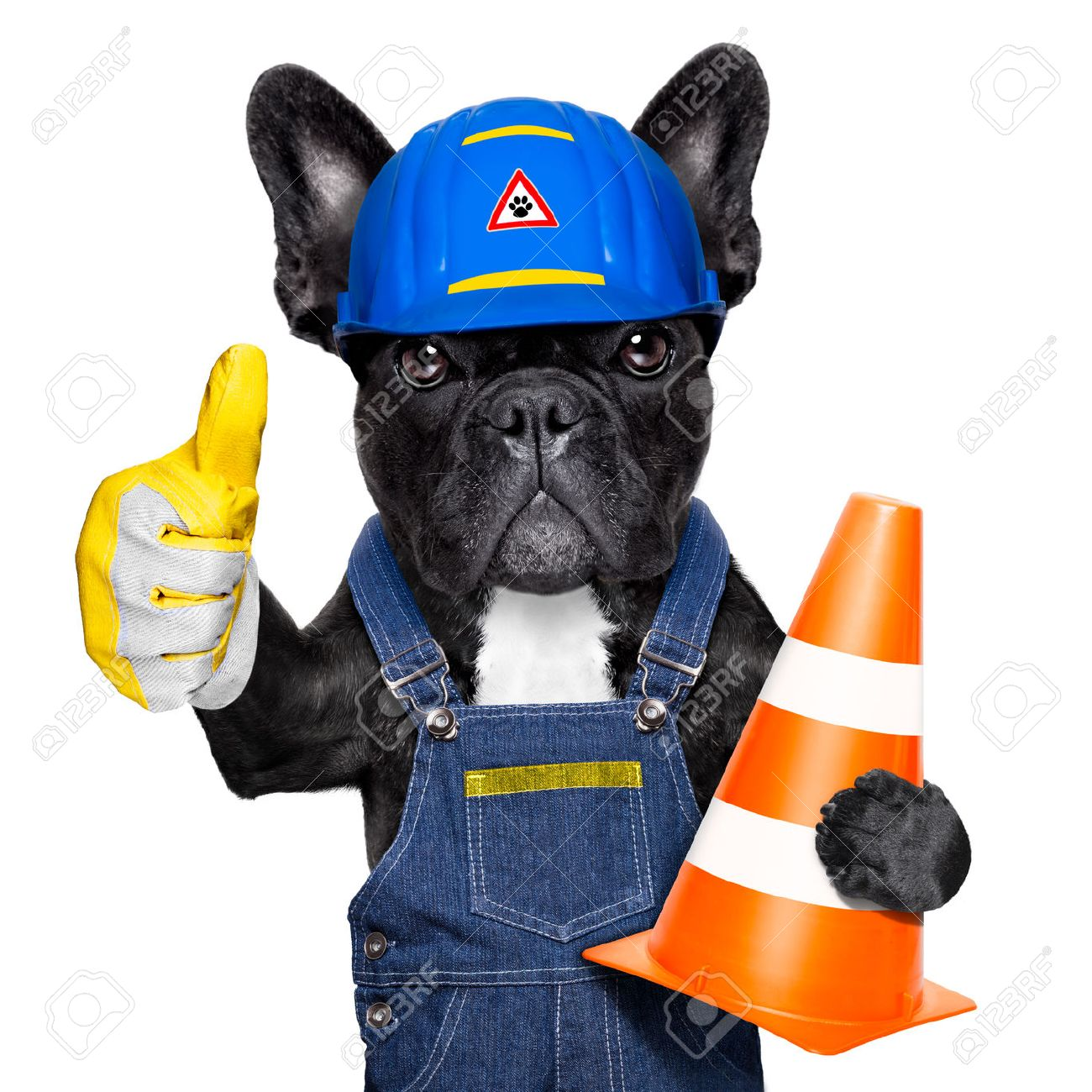worker  dog with helmet  with thumb up  ,work in progress, traffic cone in arm , isolated on white background Stock Photo - 43517874
