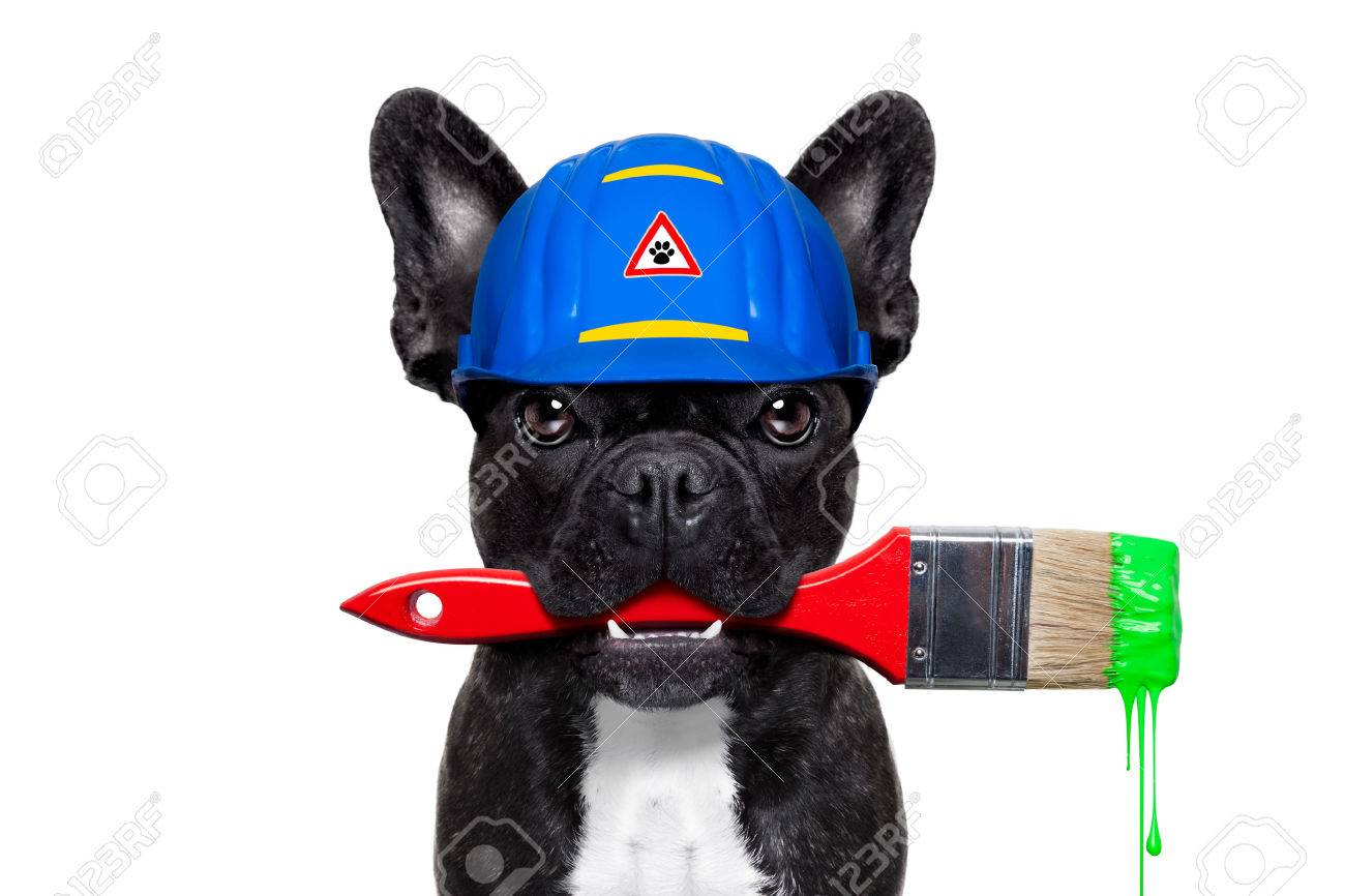 handyman painter dog worker with paintbrush  and  ready to repair, fix or paint everything at home, isolated on white background Stock Photo - 43517876
