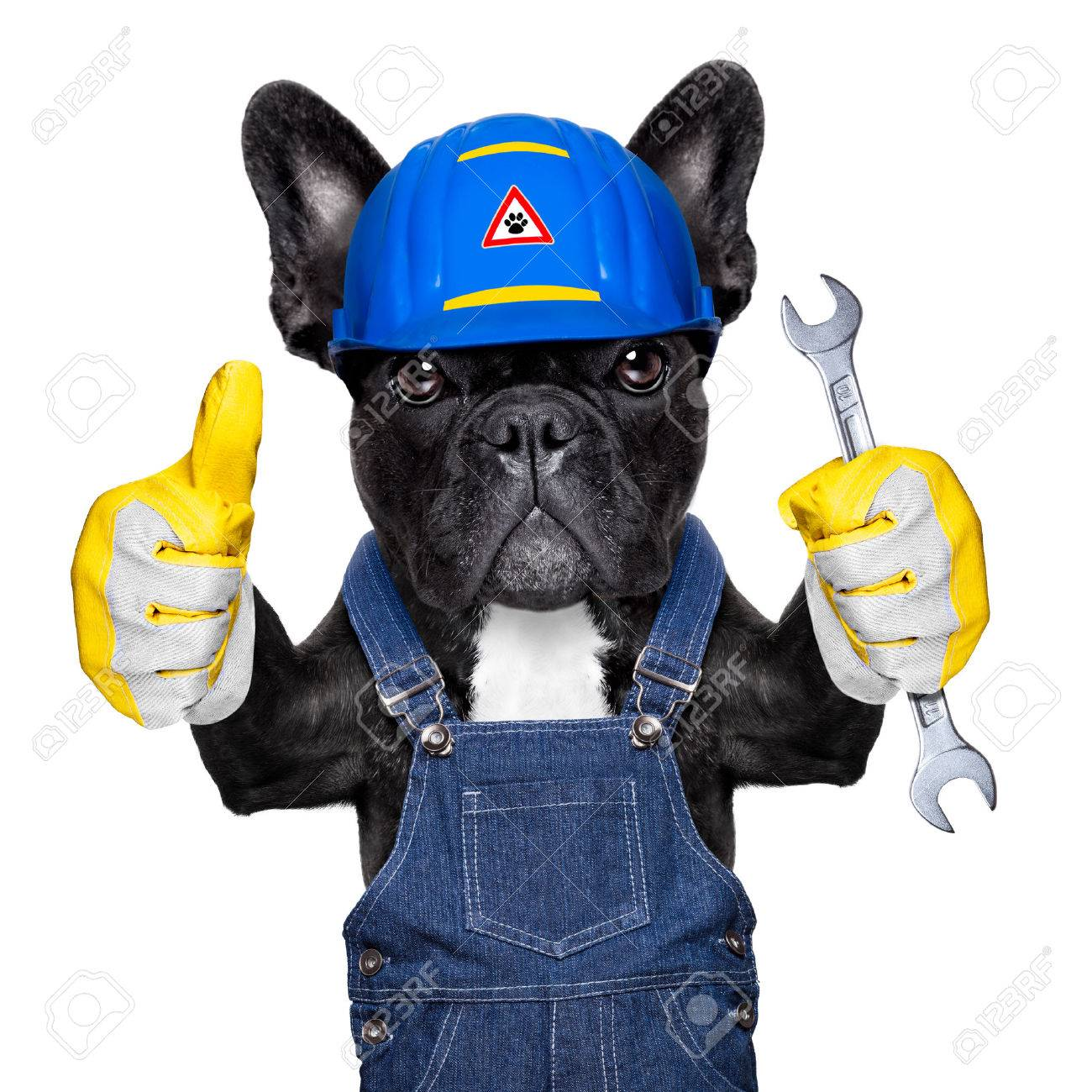 handyman dog worker with helmet and wrench in hand, ready to repair, fix everything at home, isolated on white background Stock Photo - 43517883