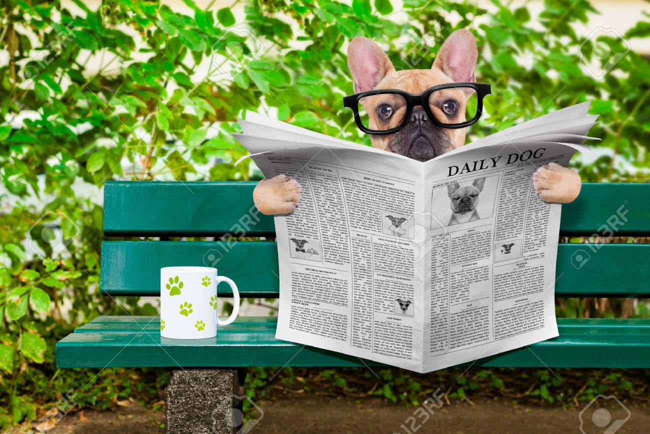 french bulldog dog reading a newspaper or magazine sitting on a bench at the park, relaxing and having a cup of tea or coffee Stock Photo - 43517957