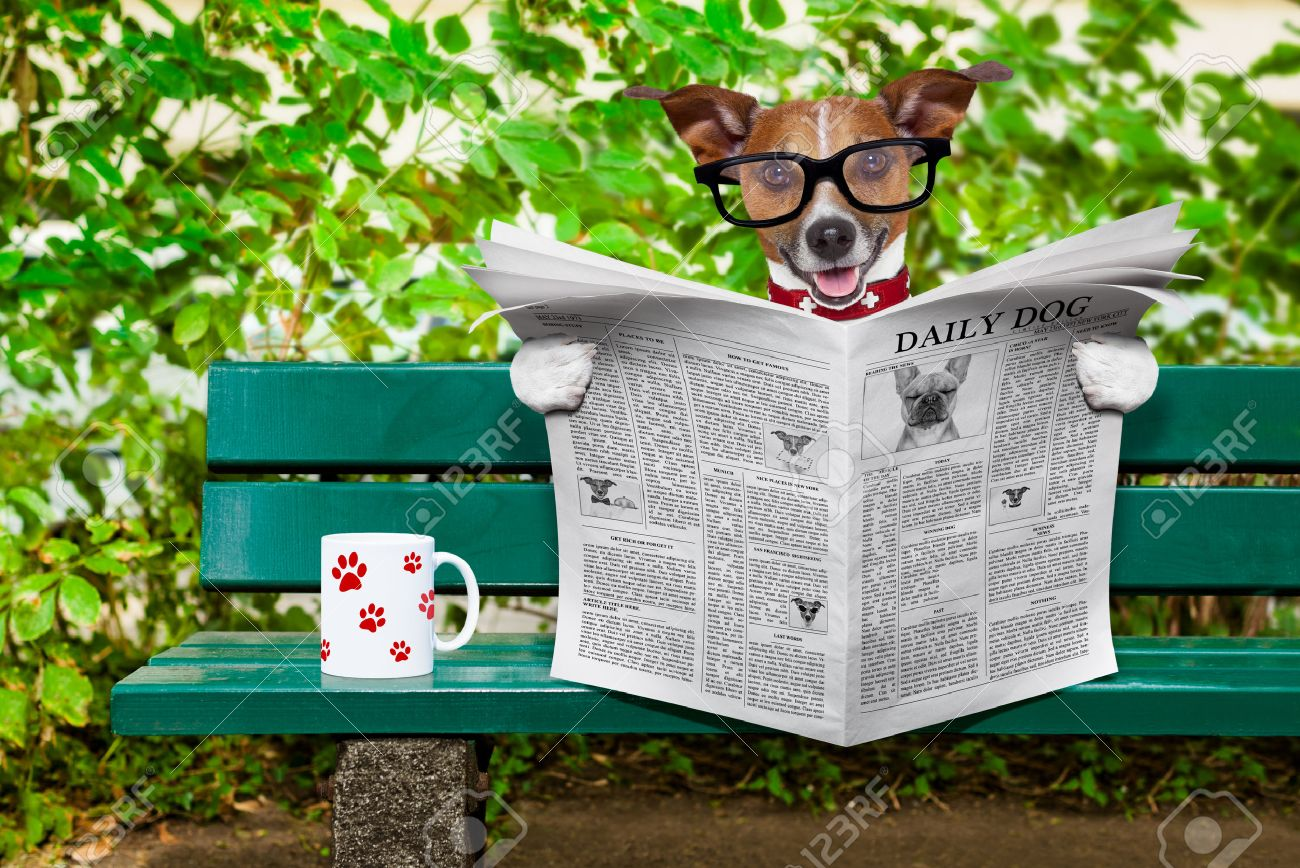 jack russell  dog reading a newspaper or magazine sitting on a bench at the park, relaxing and having a cup of tea or coffee Stock Photo - 43517967