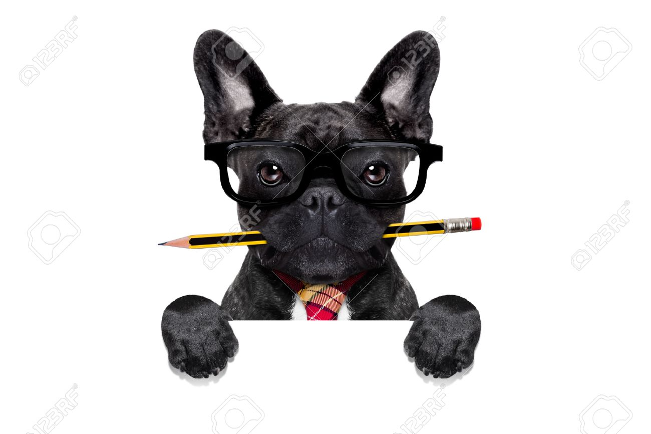 office businessman french bulldog dog with pen or pencil in mouth behind a  blank white banner or placard, isolated on white background Stock Photo - 43805939