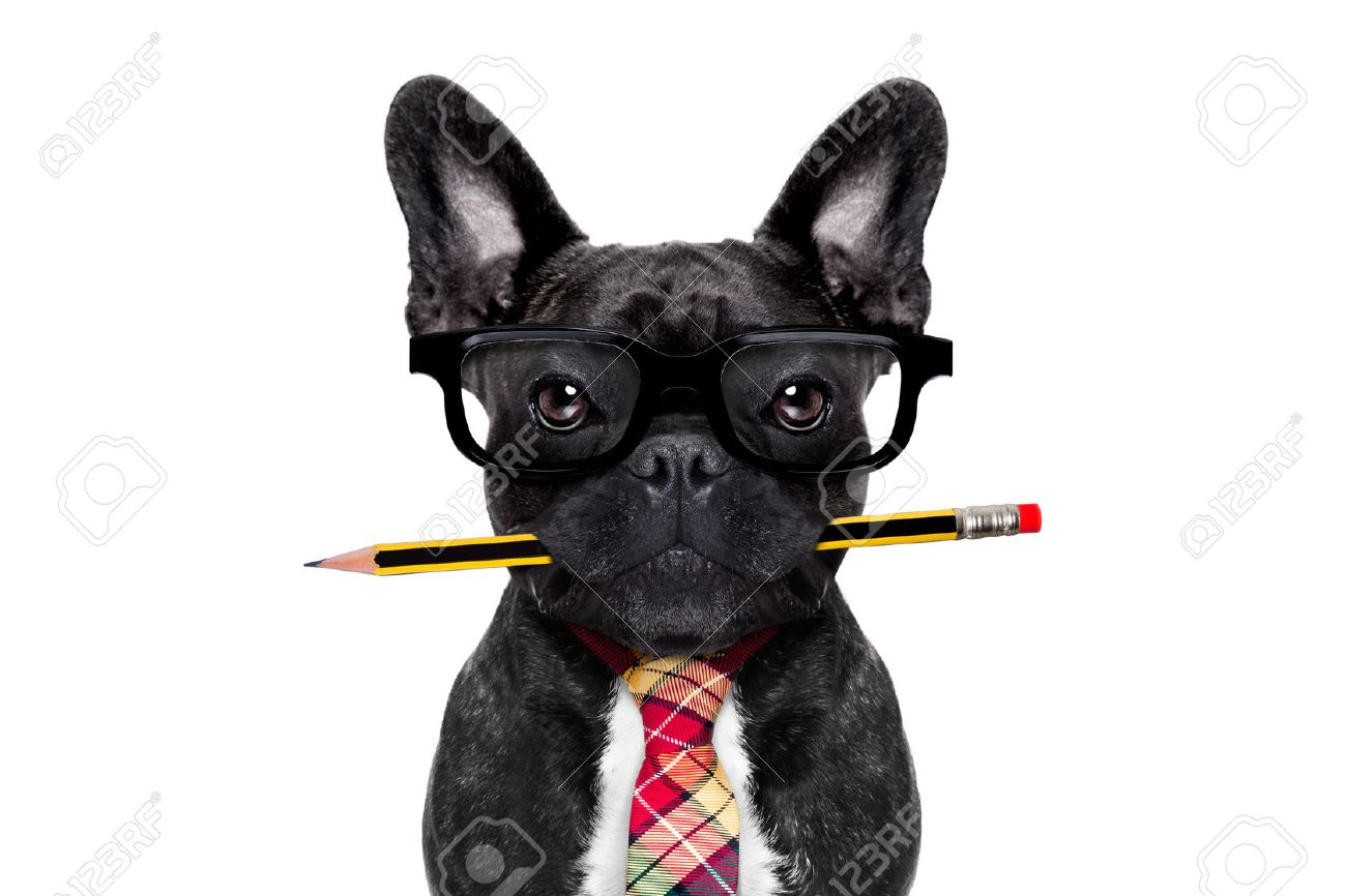 office businessman french bulldog dog with pen or pencil in mouth   isolated on white background Stock Photo - 43805994