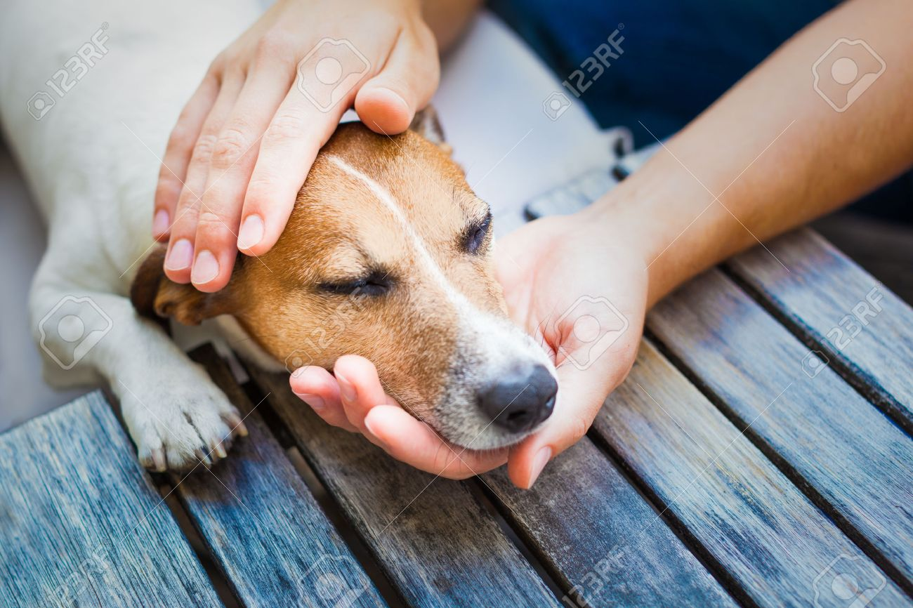 owner  petting his dog, while he is sleeping or resting  with closed eyes Stock Photo - 44245609