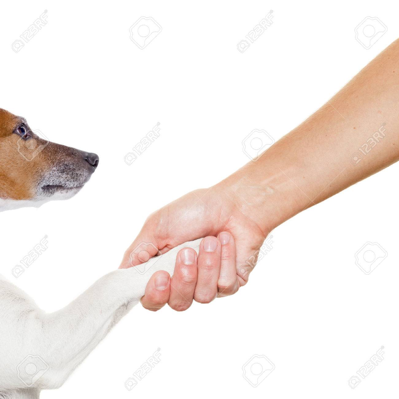 dog and owner handshaking or shaking hands dog with paw and