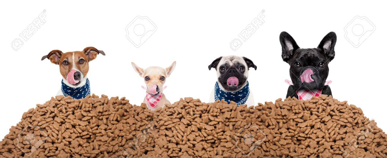 big row or group of hungry dogs behind a big mound of food , ready to eat lunch , isolated on white background Stock Photo - 44520811
