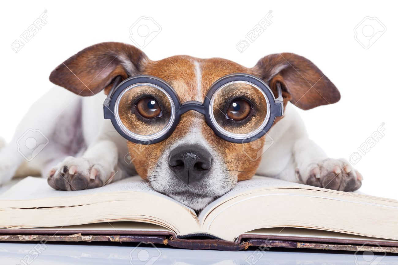 Jack Russell Savvy Book
