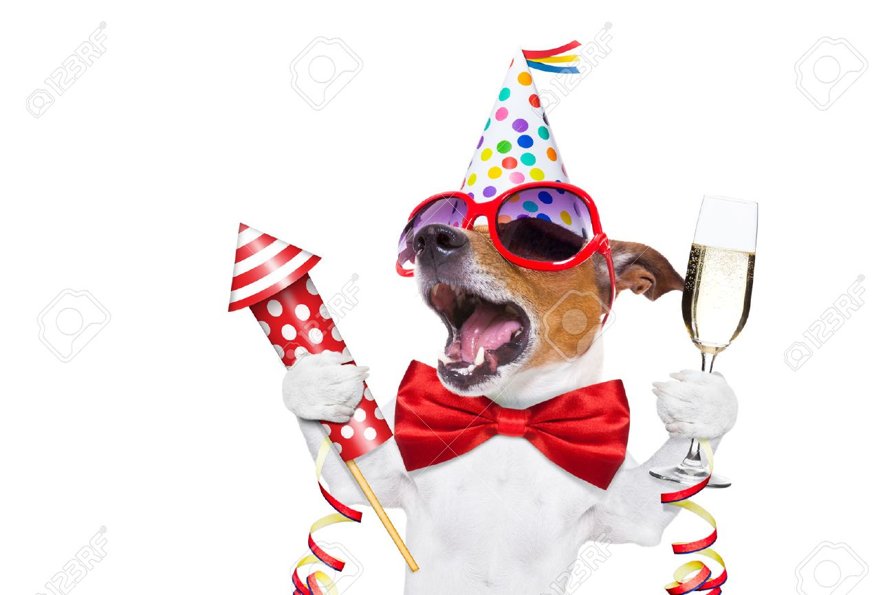 jack russell dog celebrating new years eve with champagne and singing out loud, with a fireworks rocket , isolated on white background Stock Photo - 46576841