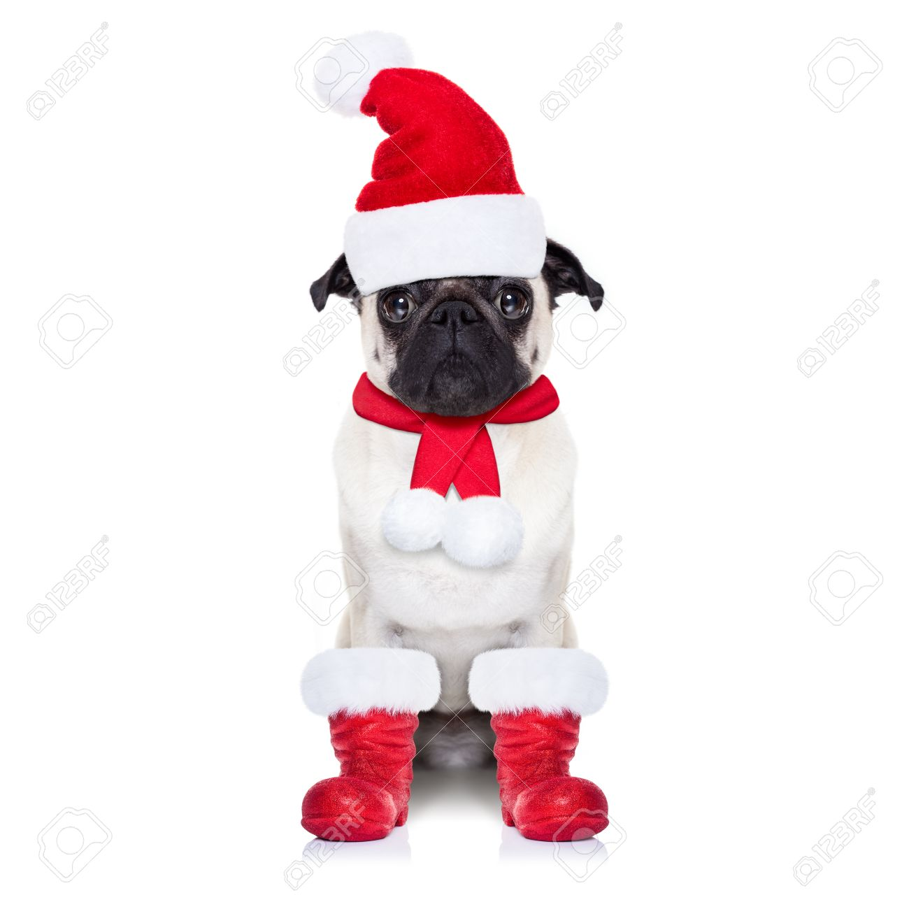 Pug Dog As Santa Claus With Red Boots, For Christmas Holidays ...