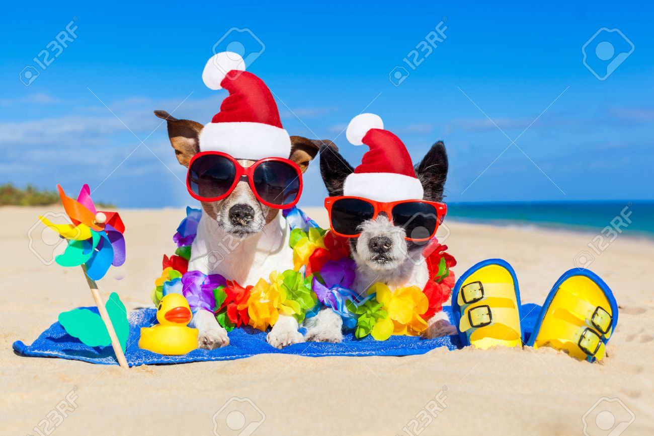 couple of two dog sitting close together wearing santa claus hat at  beach on summer christmas vacation holidays, on a honeymoon retreat Stock Photo - 48207068