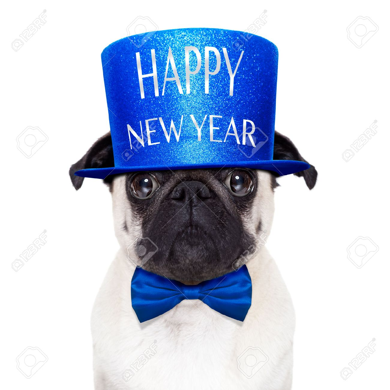 pug dog toasting for new years eve with happy new year hat isolated on white