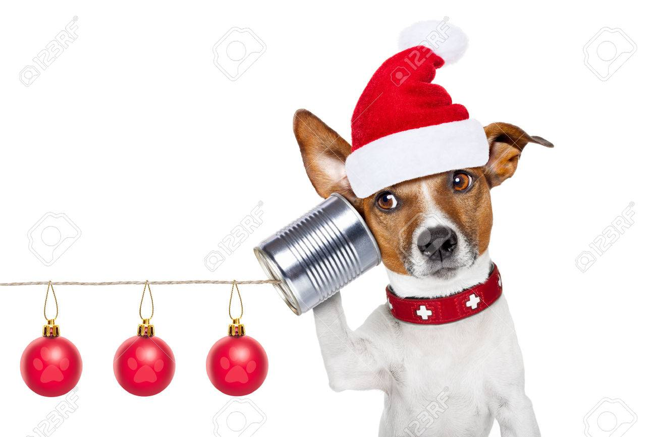 jack russell dog listening carefully what you have to say   on the tin can telephone or phone, isolated on white background on christmas holidays Stock Photo - 48486271