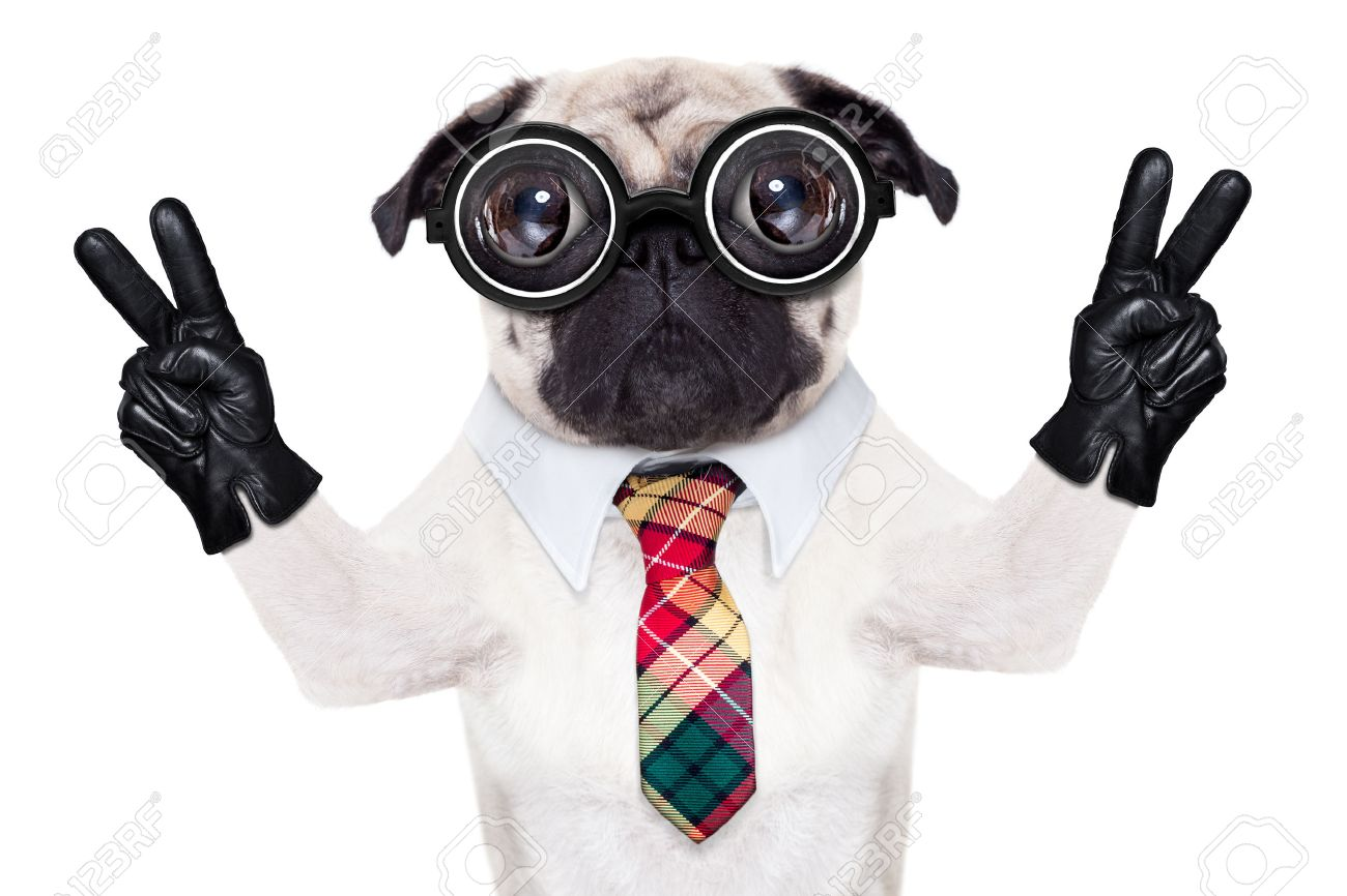 dumb crazy pug dog with nerd glasses as an office business worker with pencil in mouth ,making peace and victory signs with finger ,  isolated on white background Stock Photo - 49248137