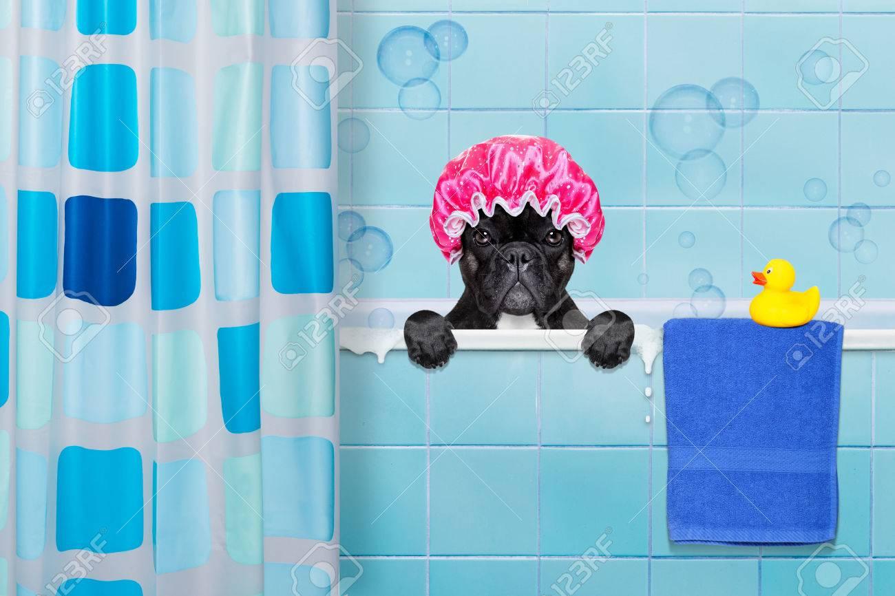 Vasca Da Bagno Plastica : French bulldog cane in una vasca da bagno non così divertito a
