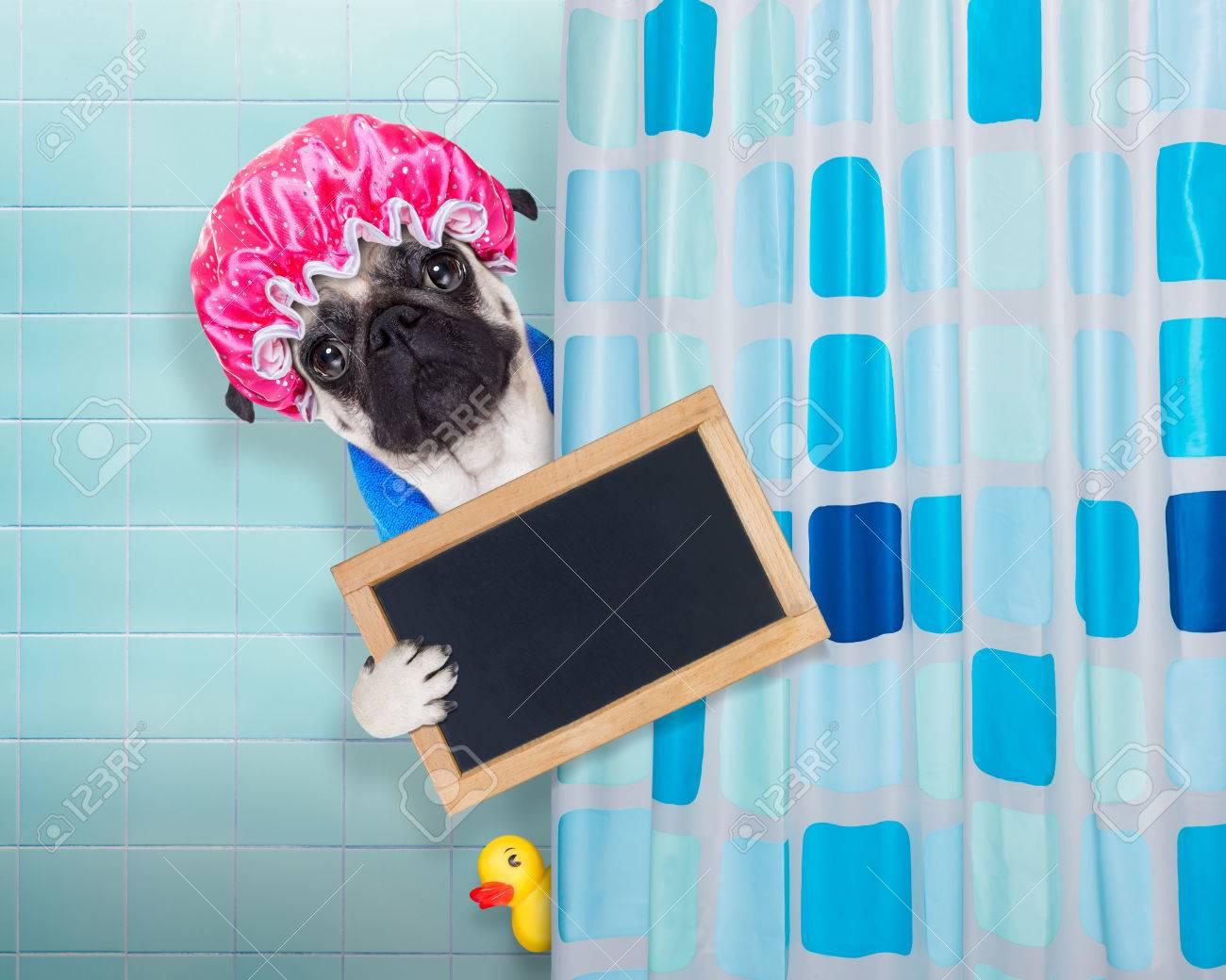 Vasca Da Bagno Con Tenda : Pug cane in una vasca da bagno non così divertito a tale proposito
