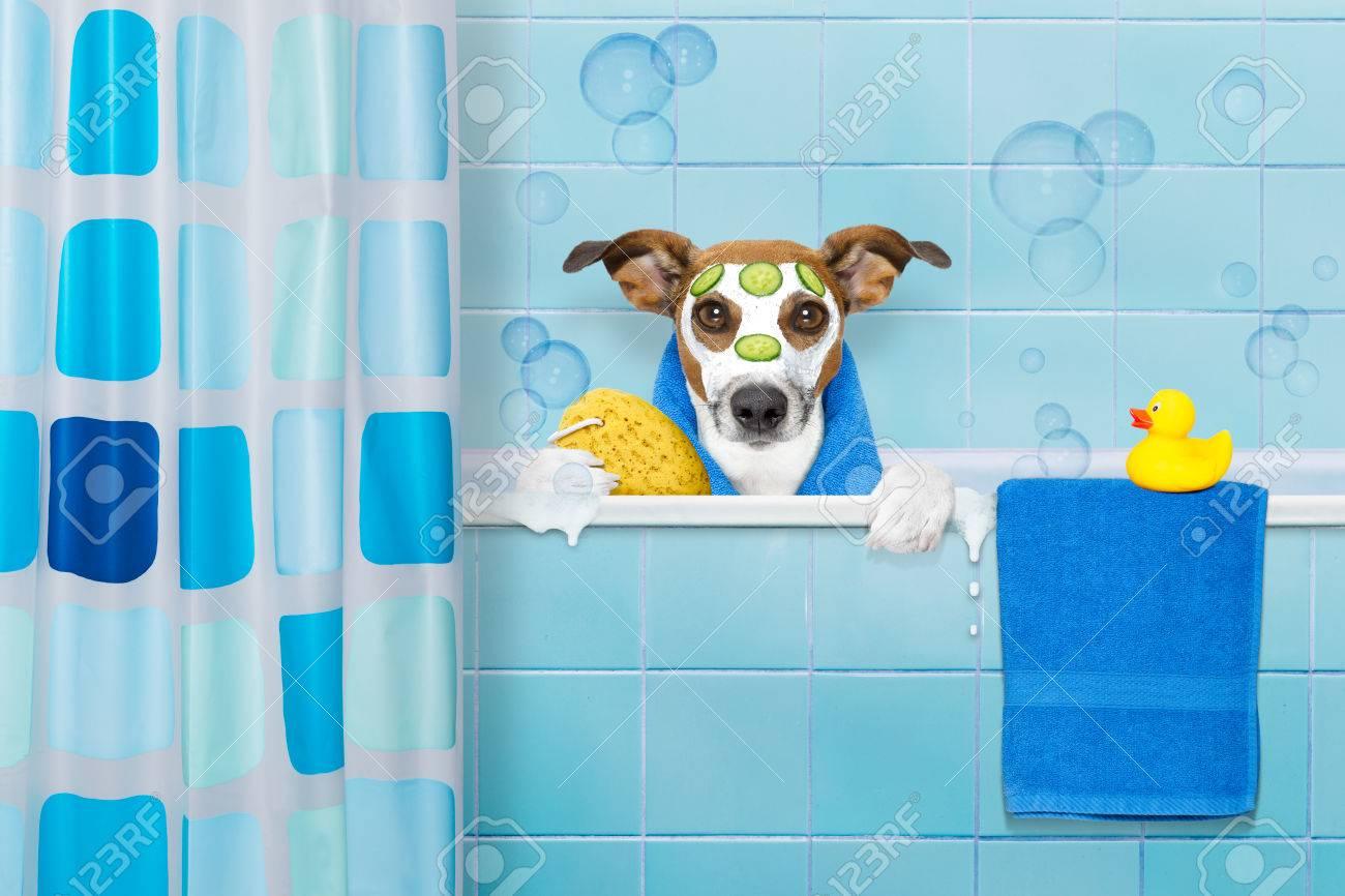 Jack Russell Hund In Einer Badewanne Nicht So Amüsiert Darüber Mit