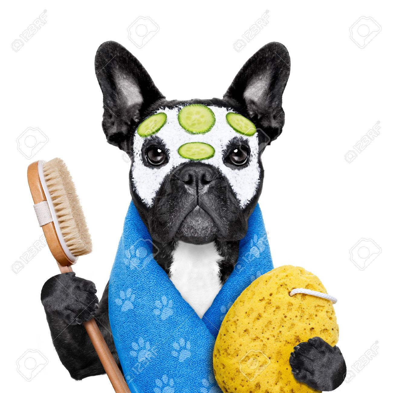 french bulldog dog relaxing with beauty mask in spa wellness center ,getting a facial treatment with moisturizing cream mask and cucumber , sponge and brush, isolated on white background - 51513025