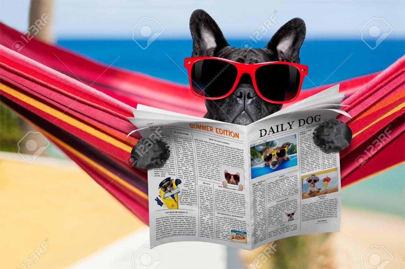 db96f204c09e Francés bulldog se relaja en una hamaca fantasía de color rojo con gafas de  sol rojas periódico o revista de lectura, días de vacaciones de verano ...